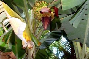 Apple Banana Flower