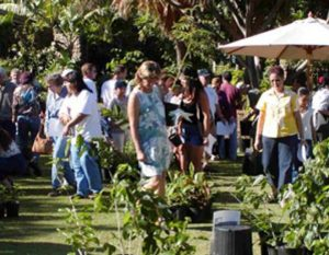Maui Arbor Day giveaway