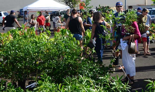 Kauai Arbor Day