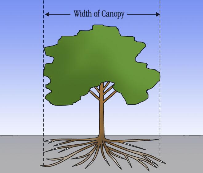 Rootspread illustration