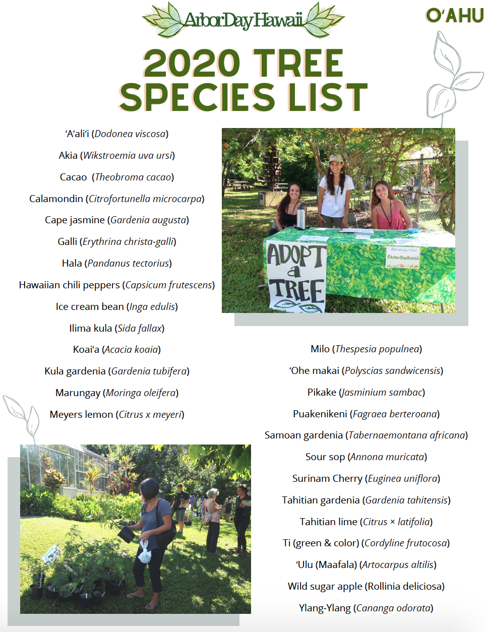 image of tree species list for Oahu Arbor Day